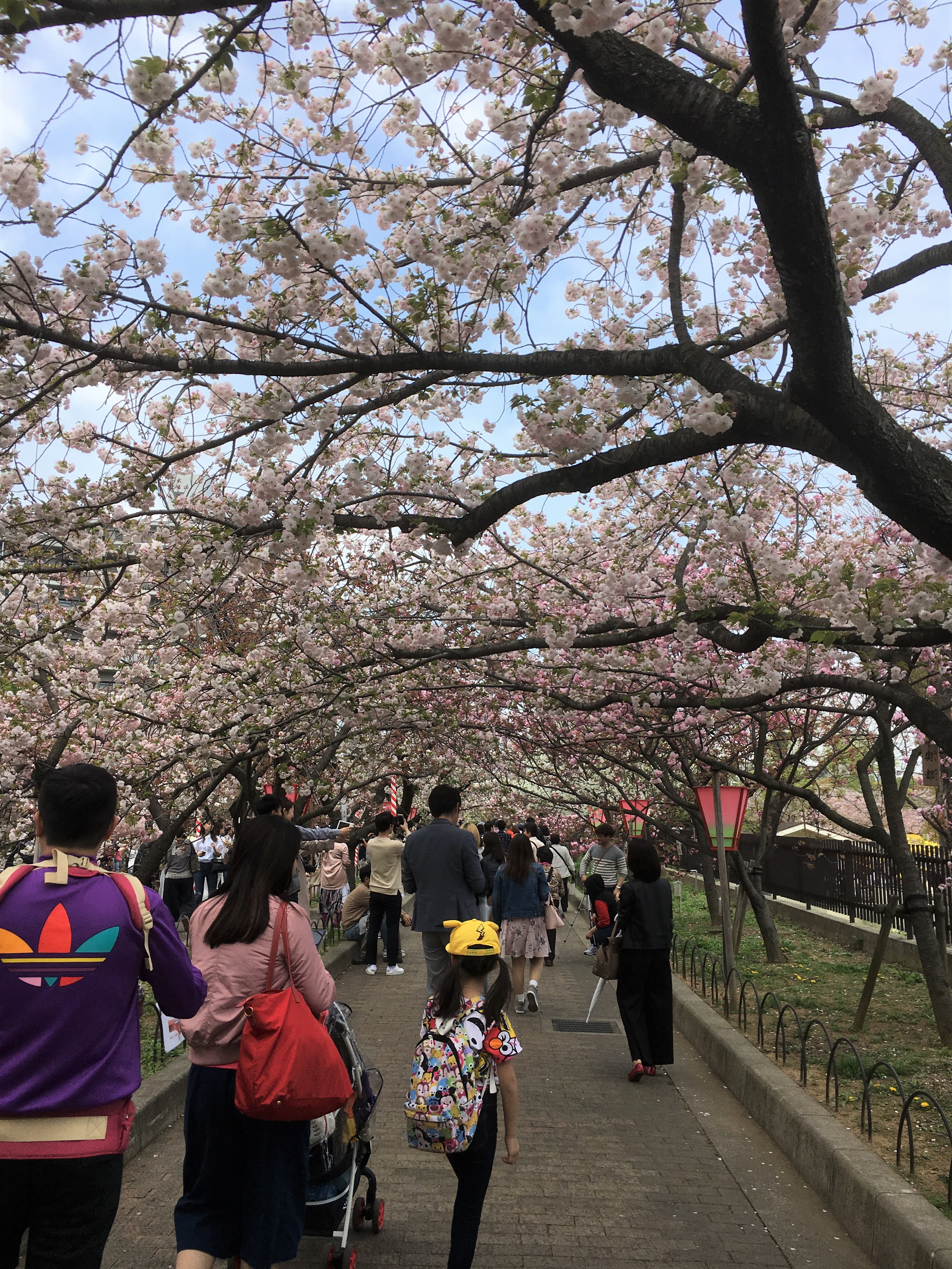 tunnel of cherry blossoms filled with visitors at the japan mint