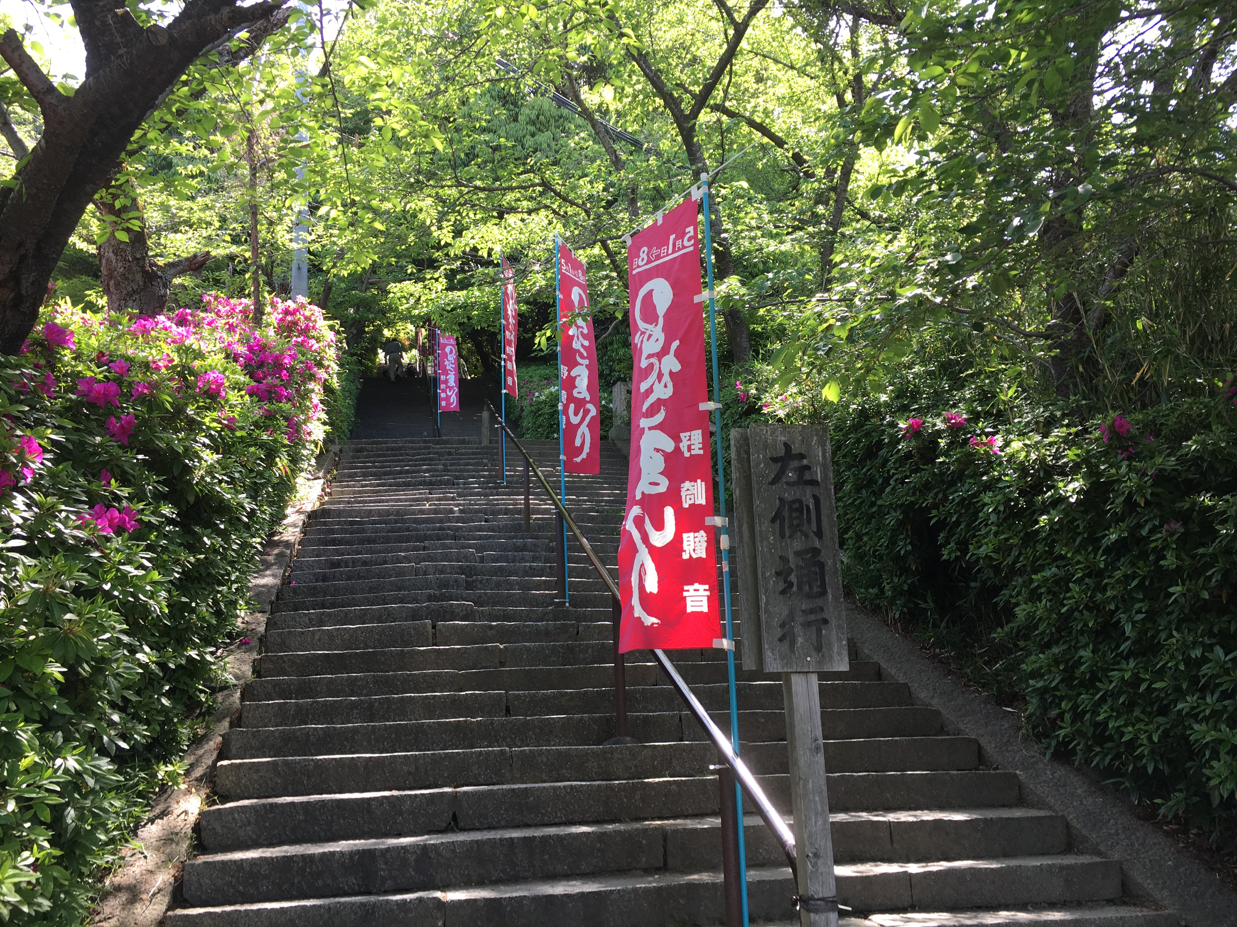 stone stairs and blooming azaleas during nozaki mairi