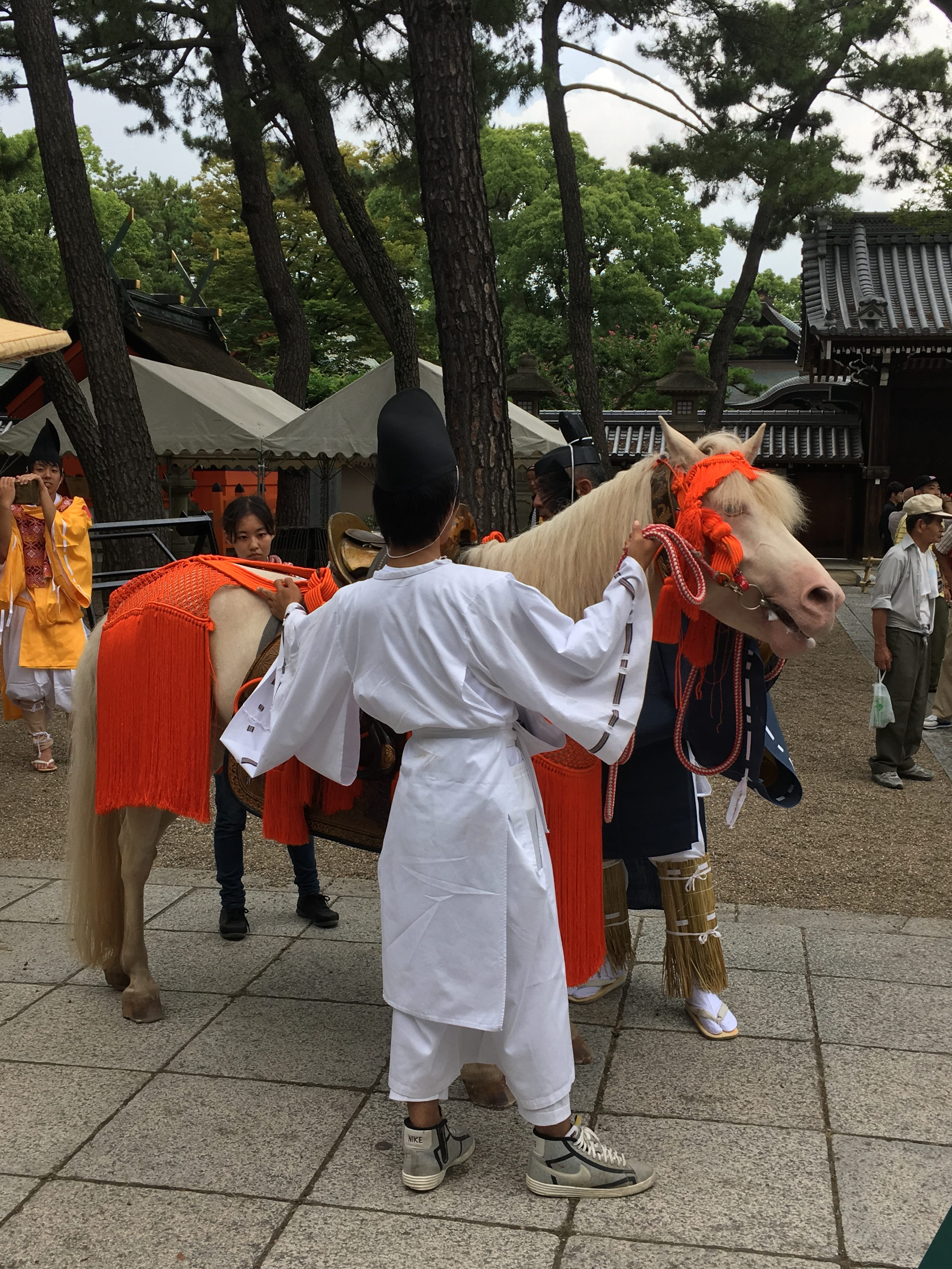 white horse shroud in orange attire being steadied by shinto priest