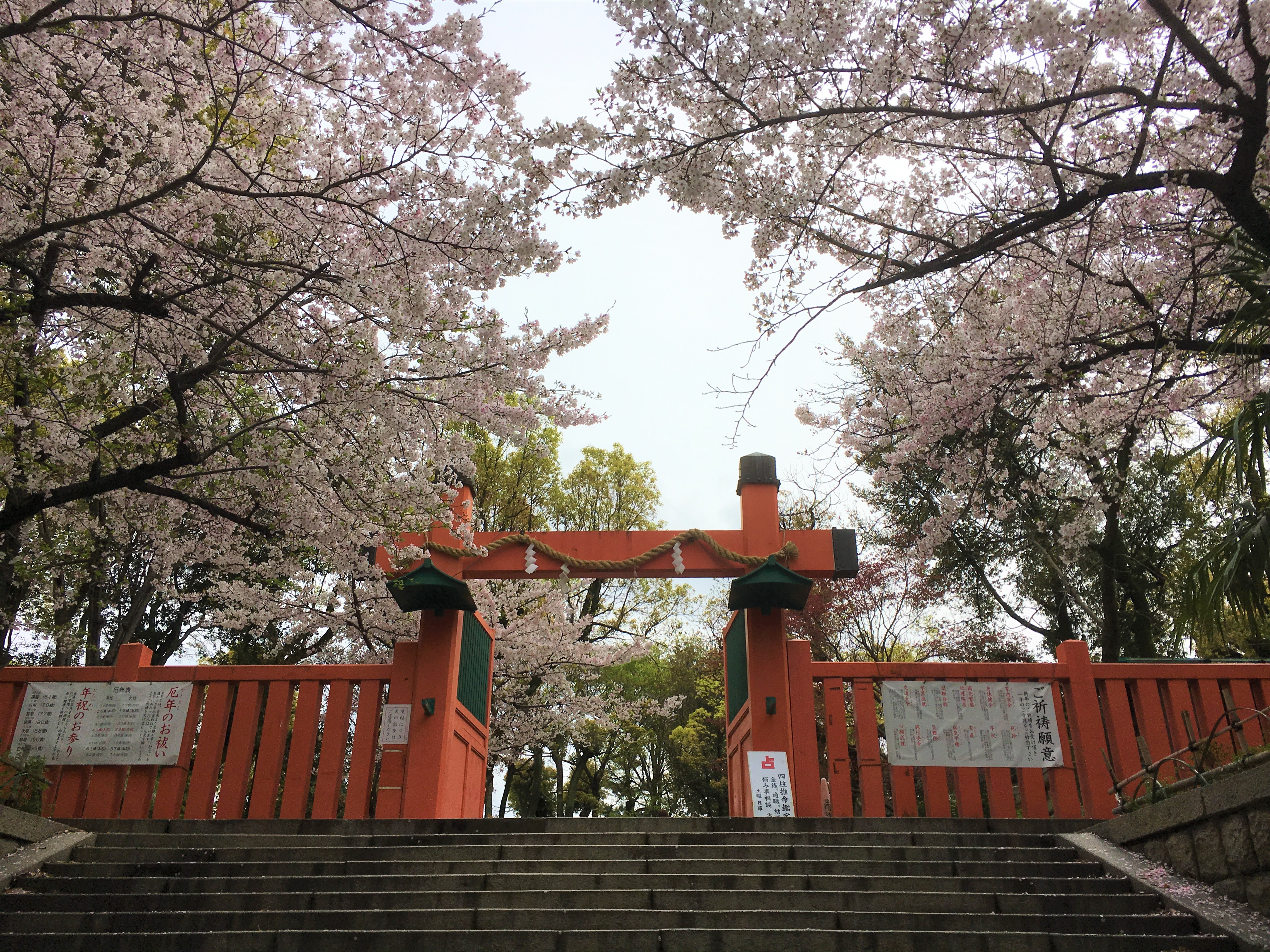 entrance of Japanese shrine with red and black coloring in and cherry blossoms