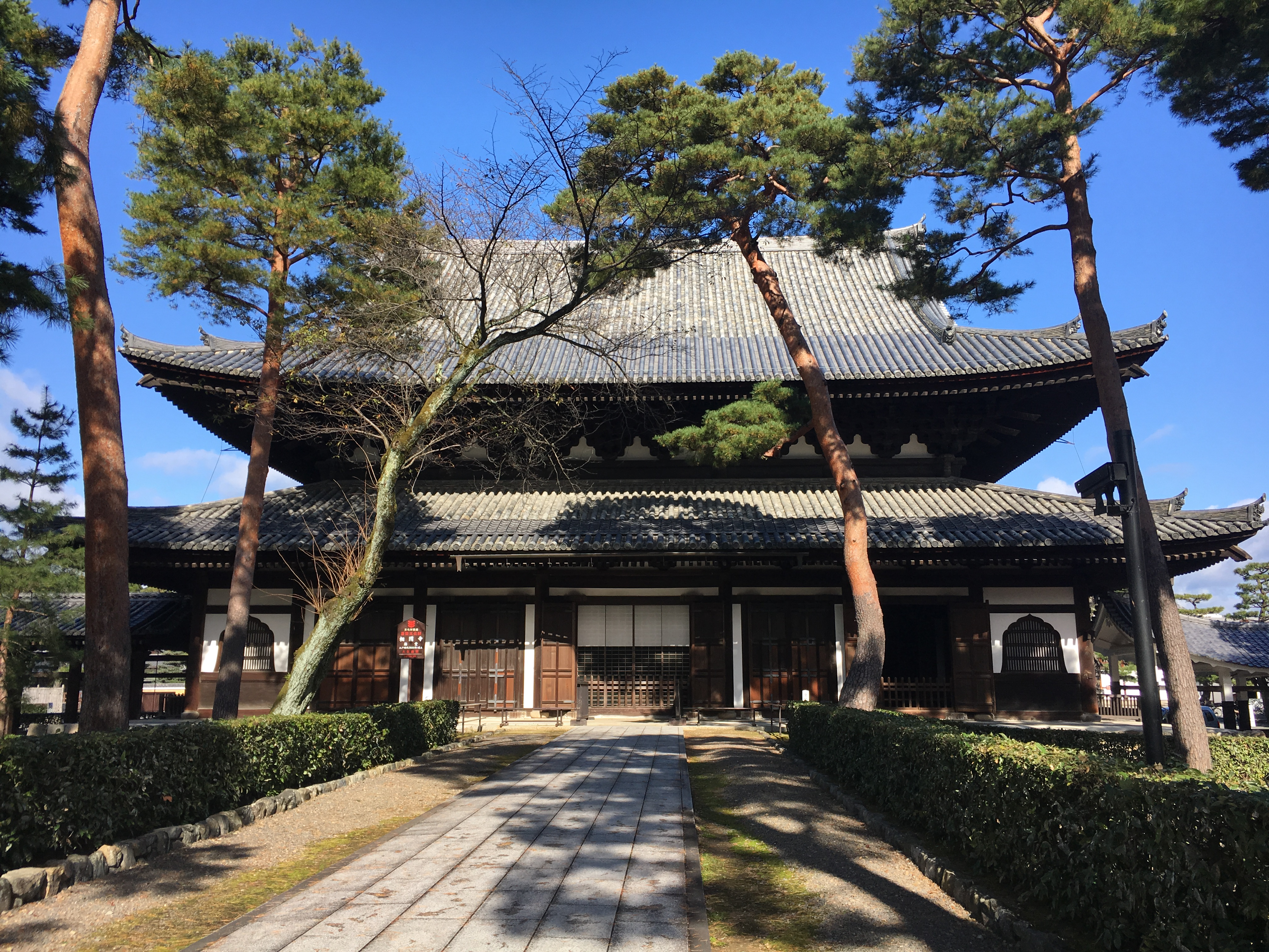 Shokoku-ji with pine trees