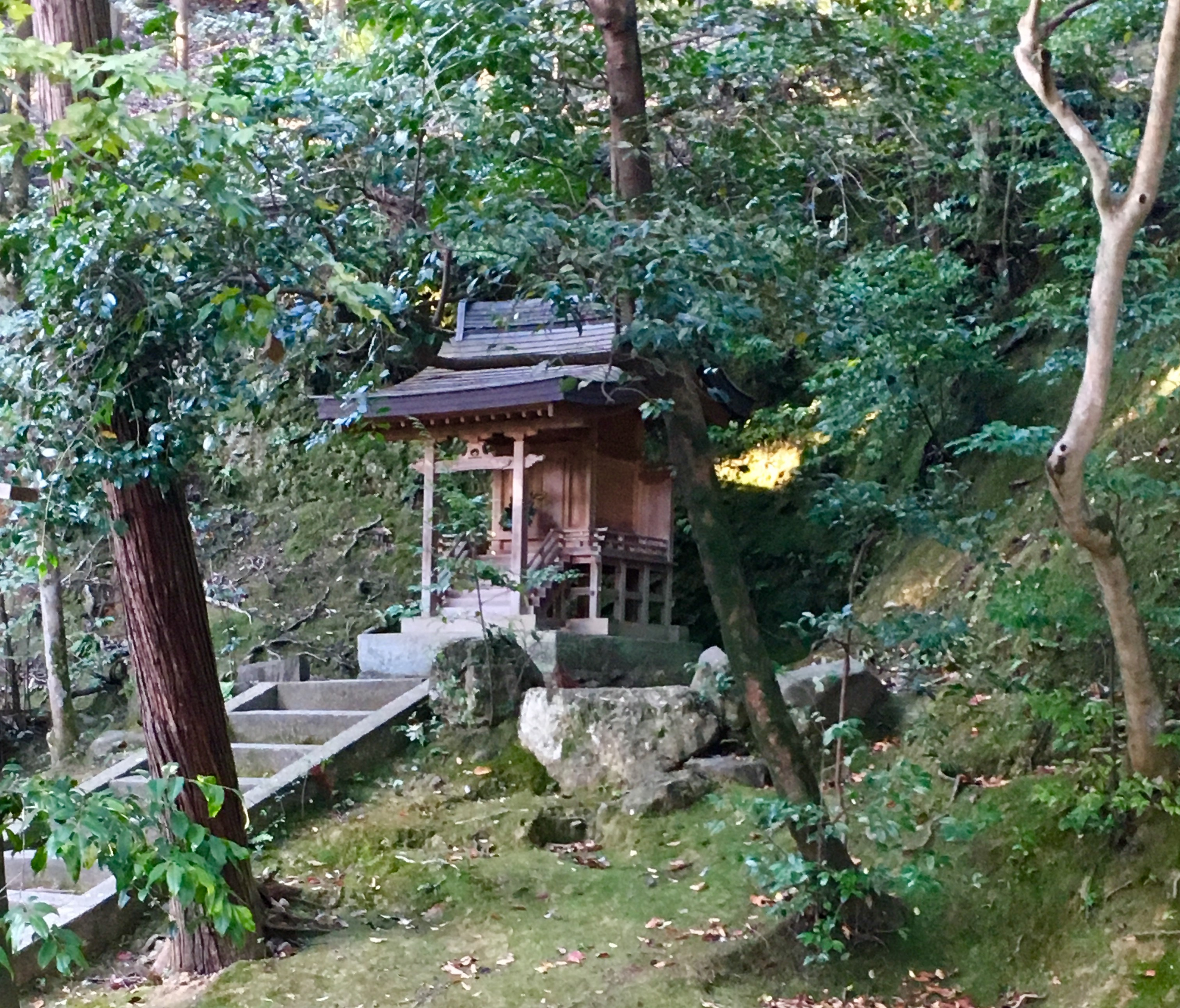 small Japanese shrine against trees and moss