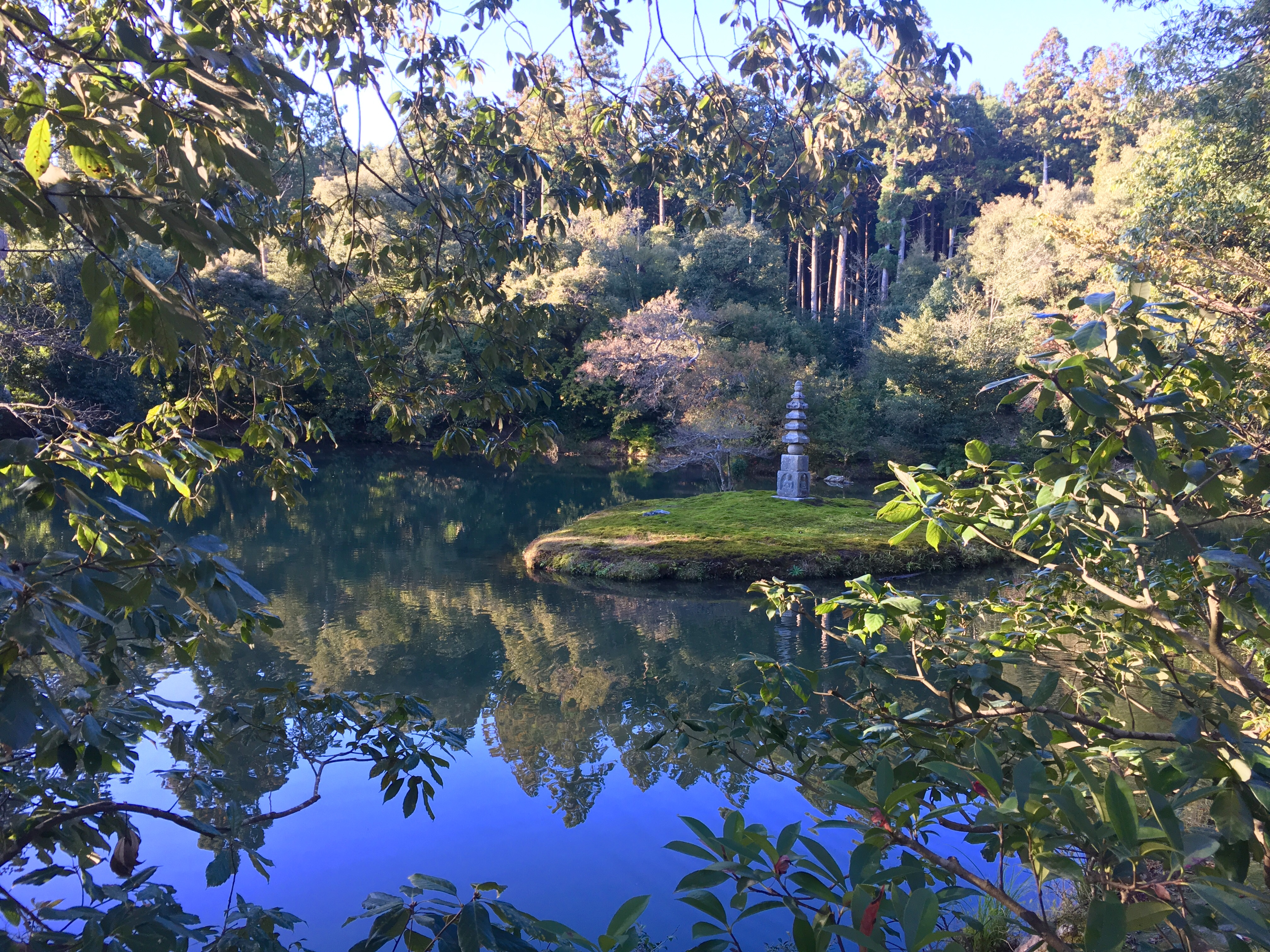 beautiful japanese pond surrounded by trees