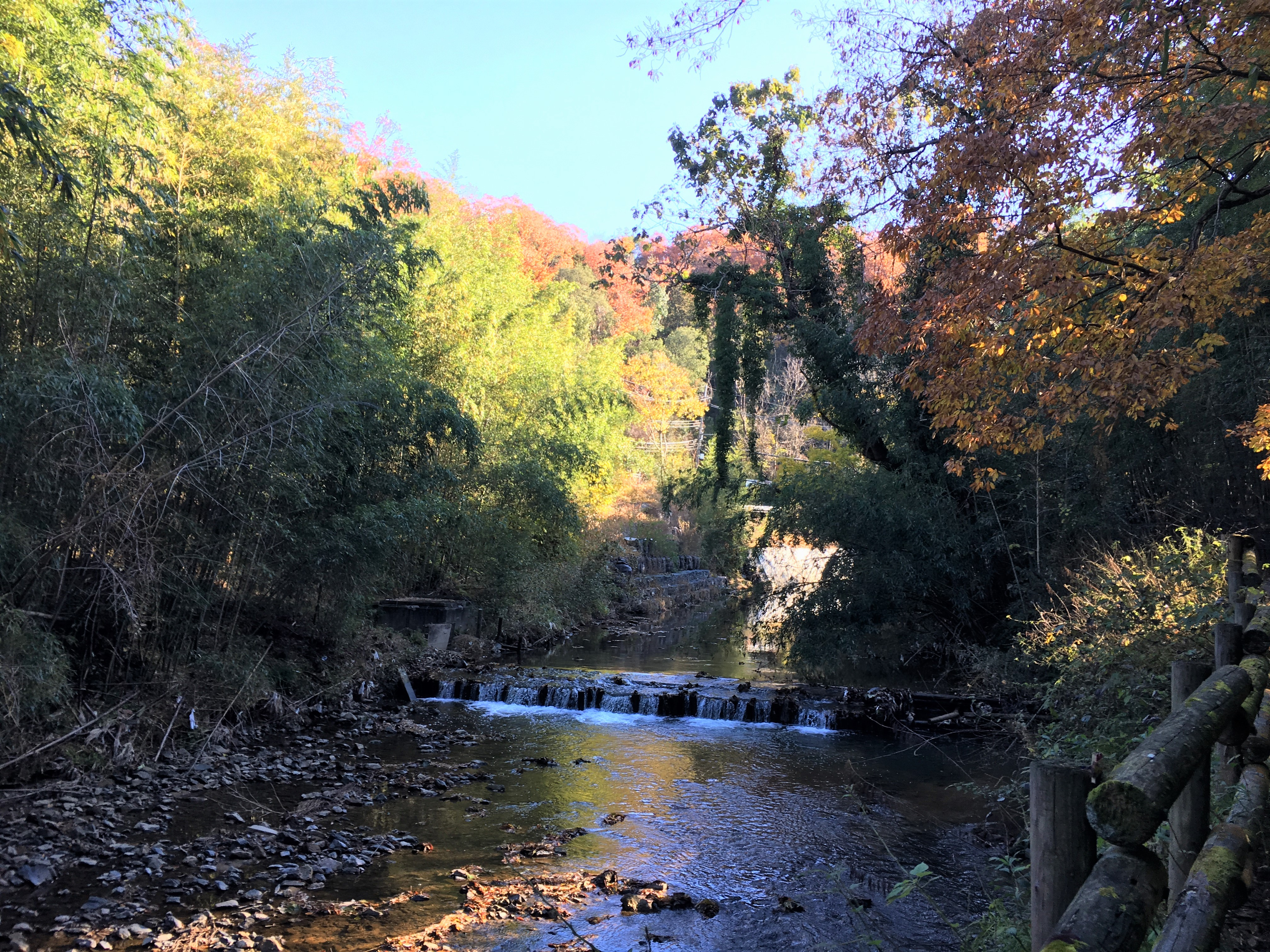babbling rocky river and fall leaves