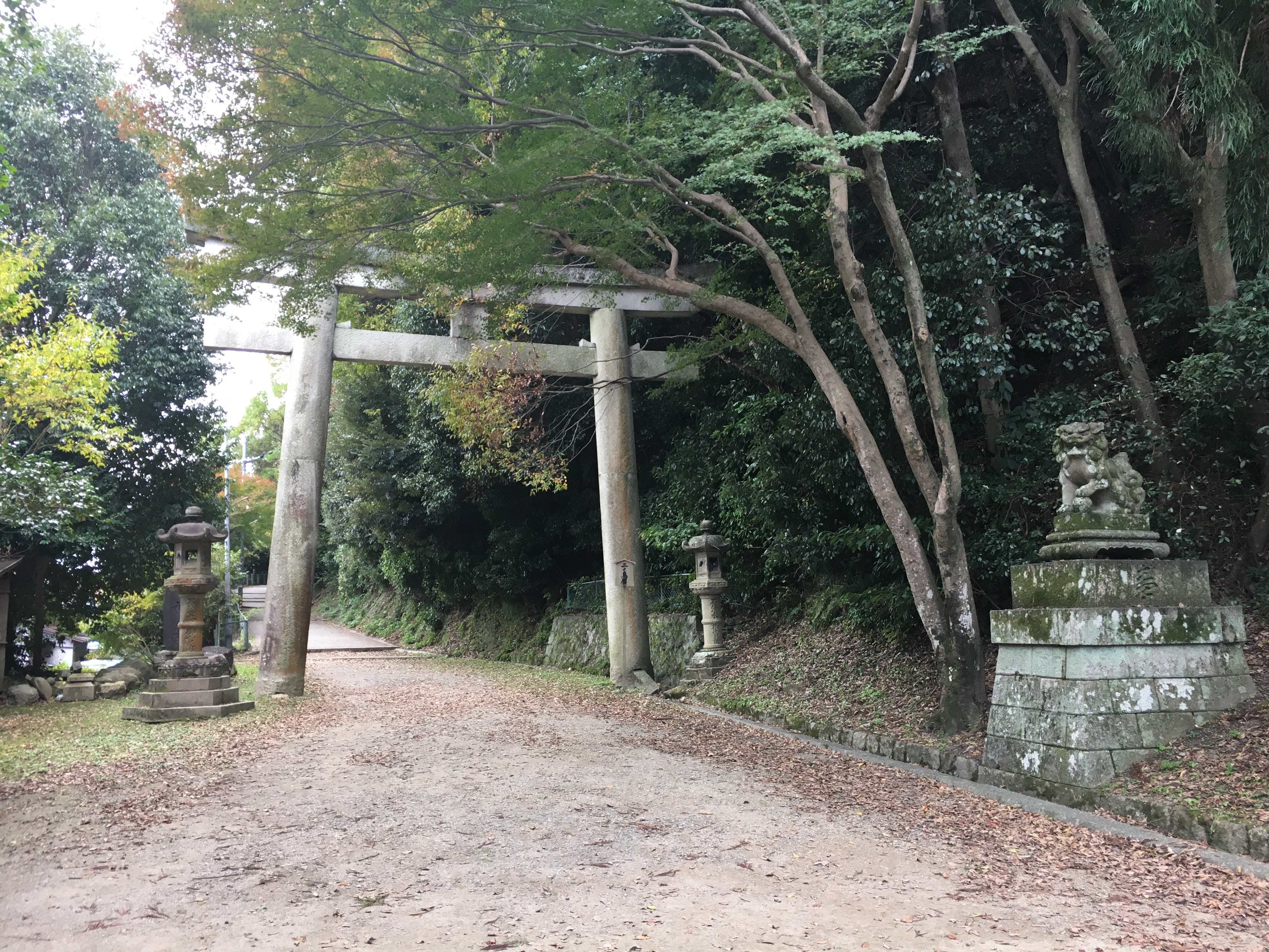 path between stone torii and guardians surrounded behind trees