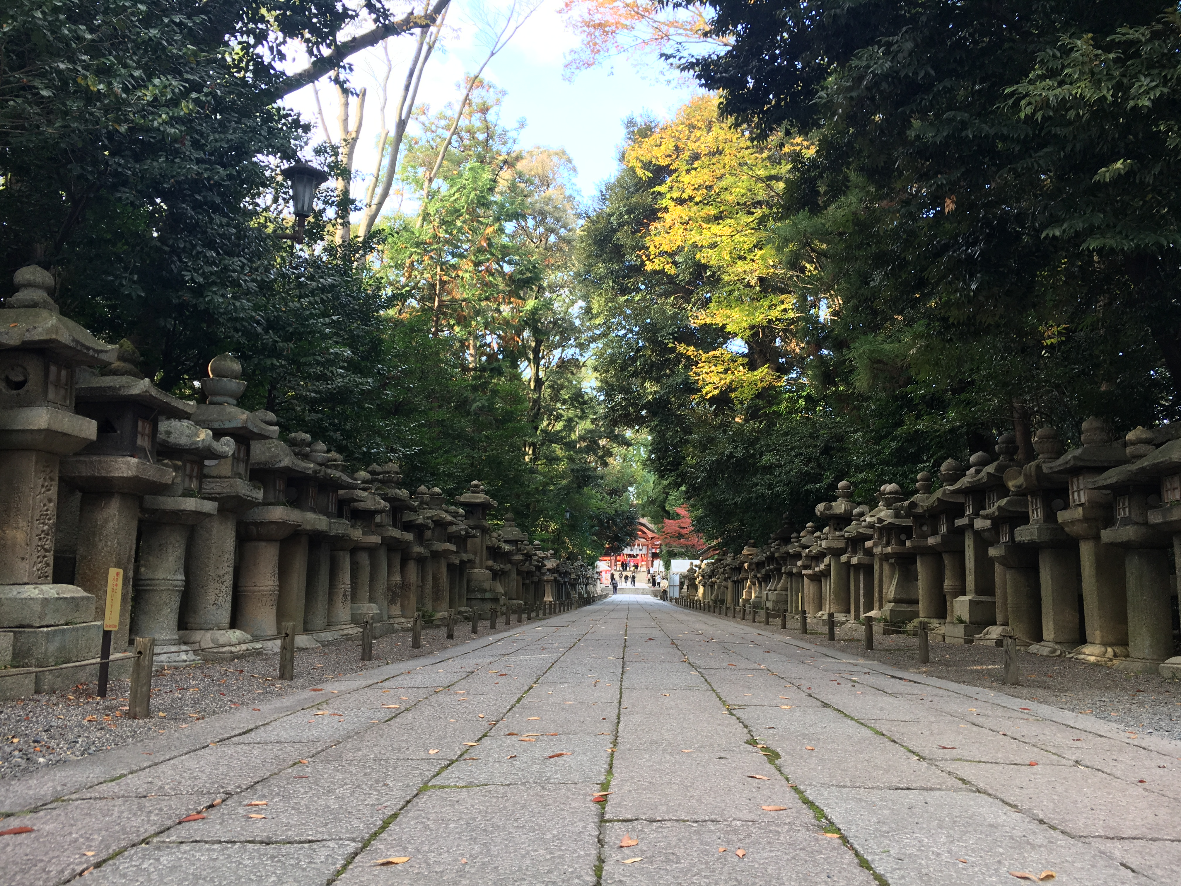 stone path on a fall day lined with Japanese stone lanterns