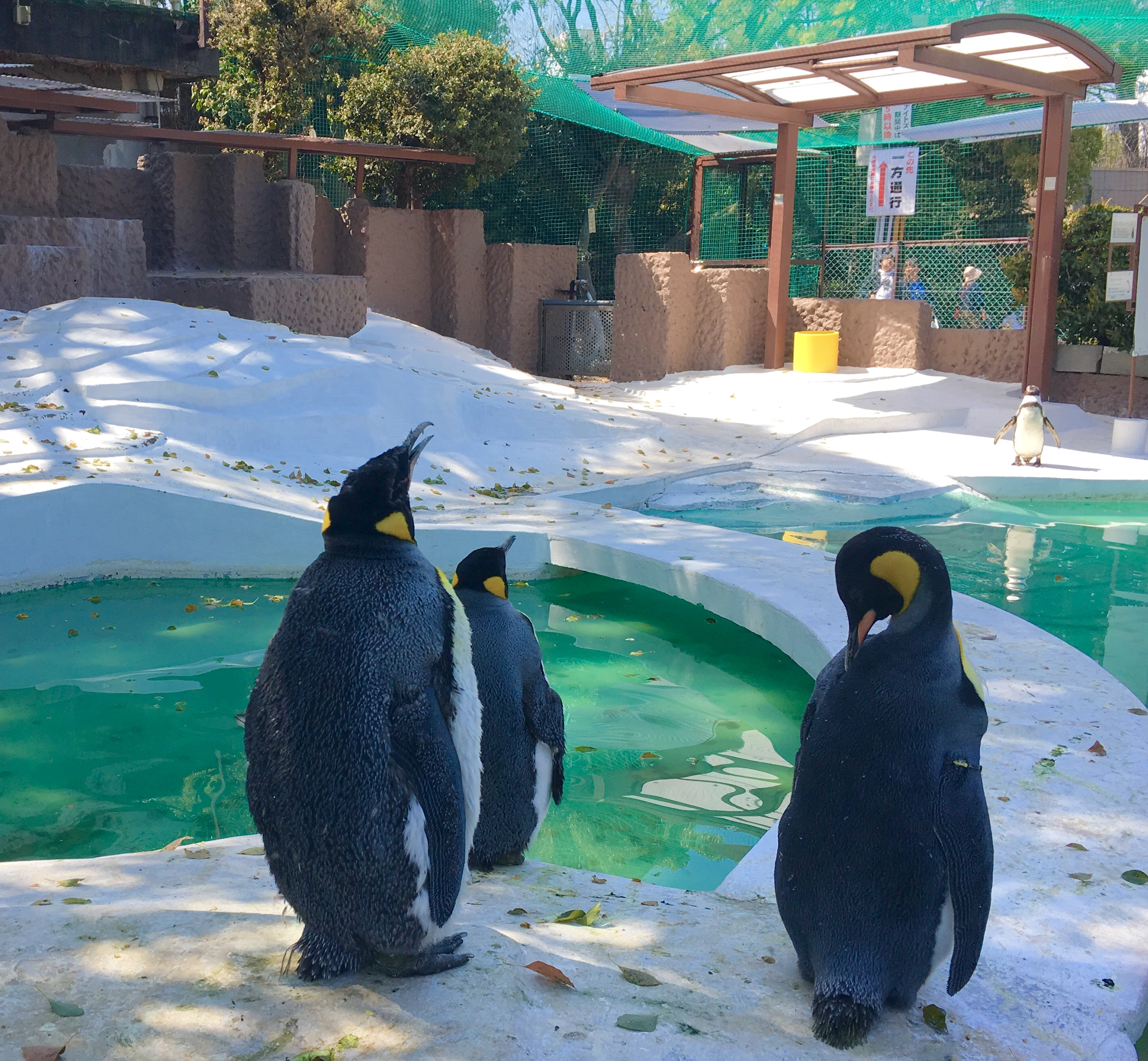 three emperor penguins sitting in their enclosure at Tennoji Zoo