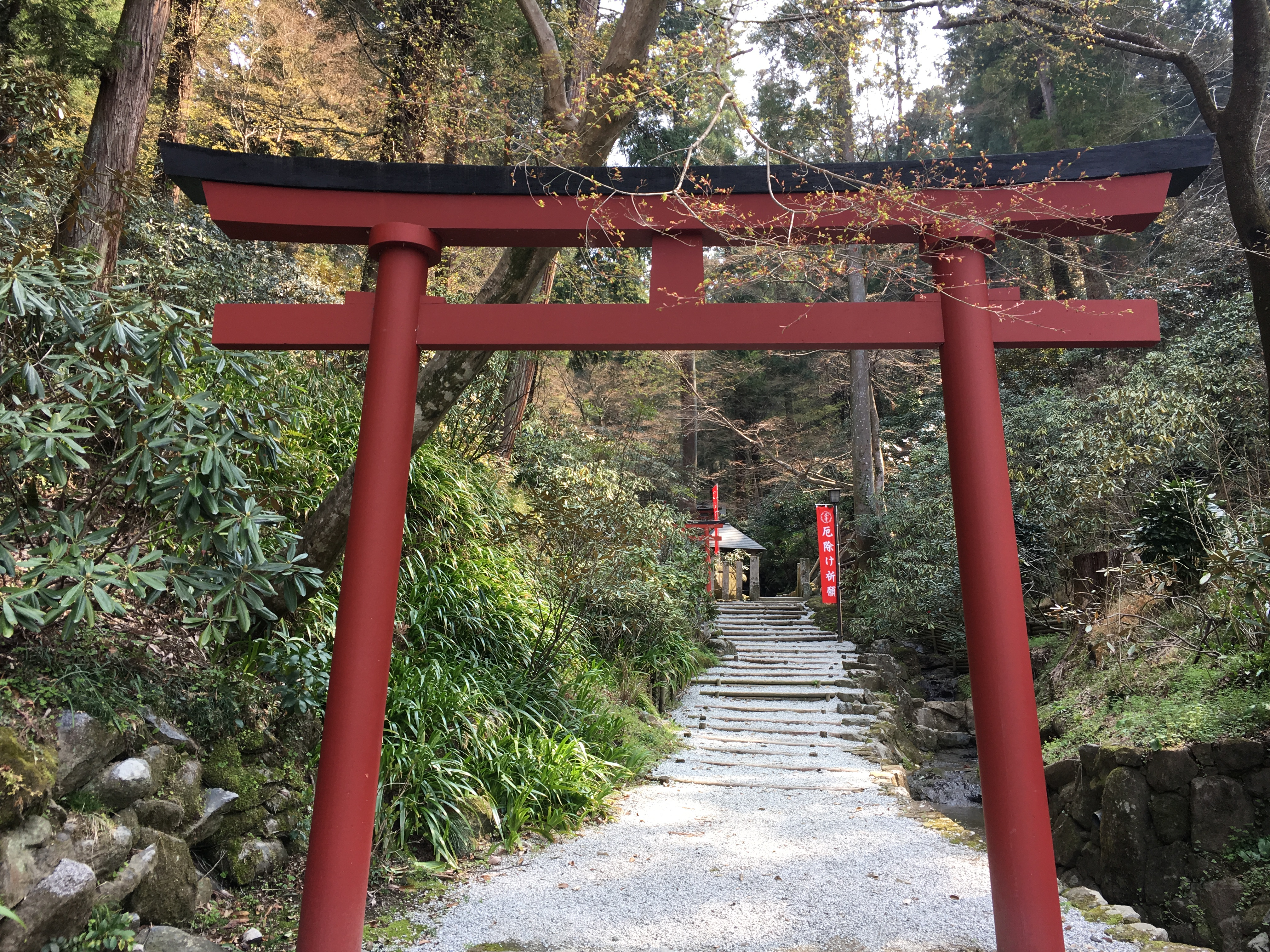 red and black Japanese torii before a gravel path lined with rhodedendrons