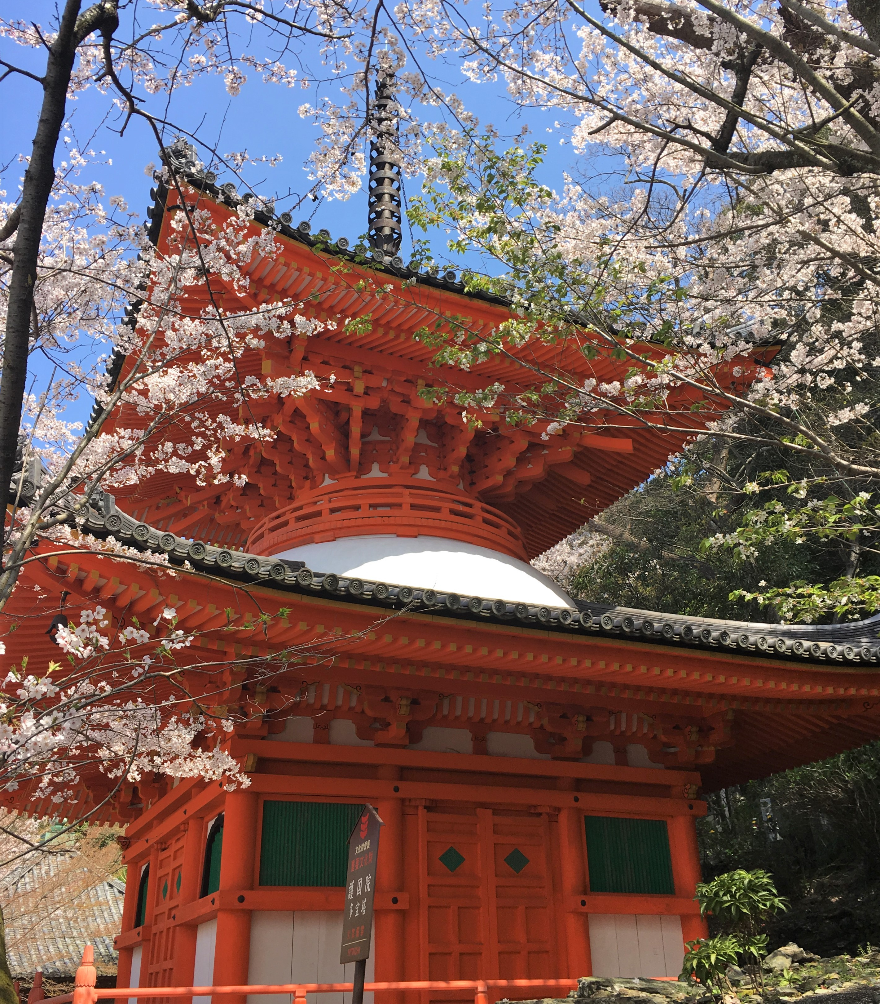 Kimii-dera temple tahoto surrounded by cherry blossoms