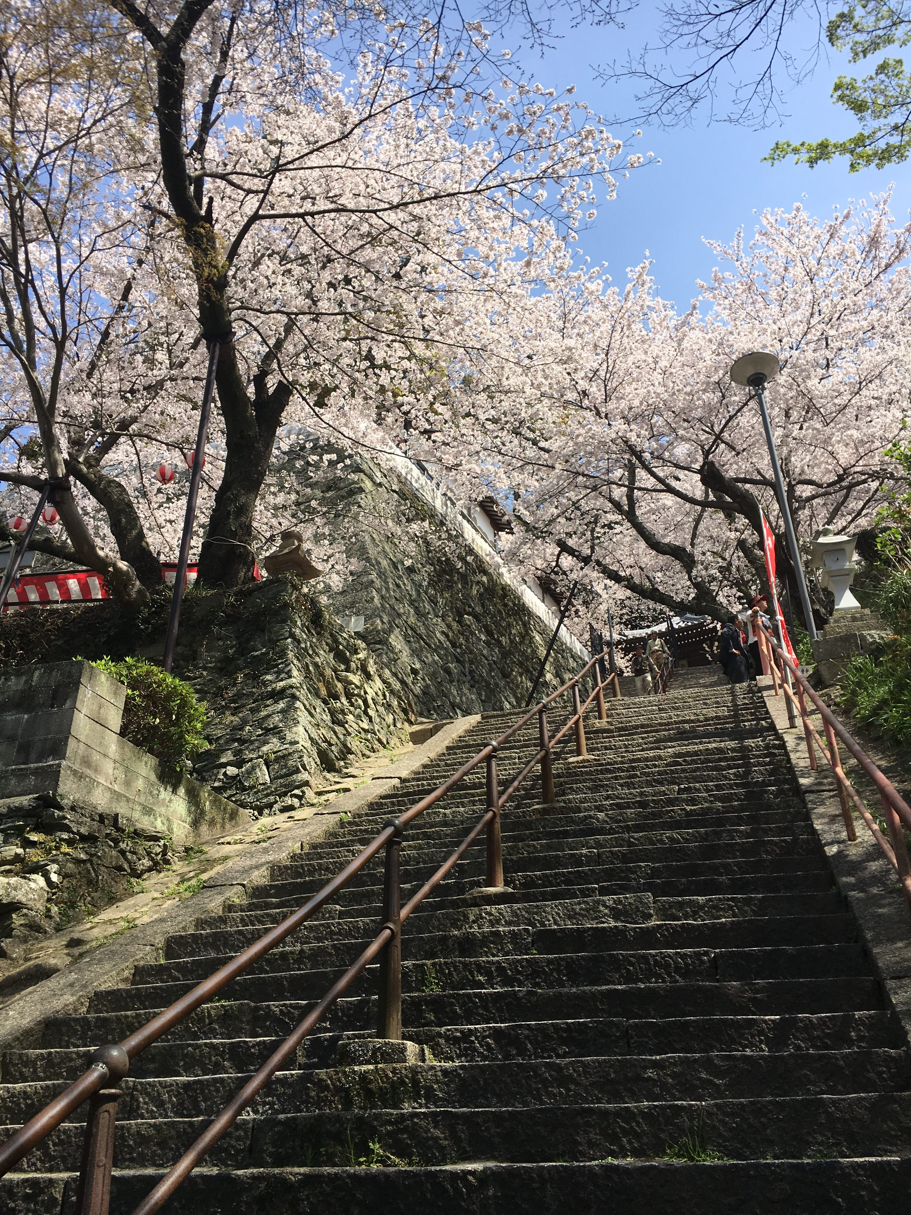 tall stone staircase of Kimii-dera temple in sakura season