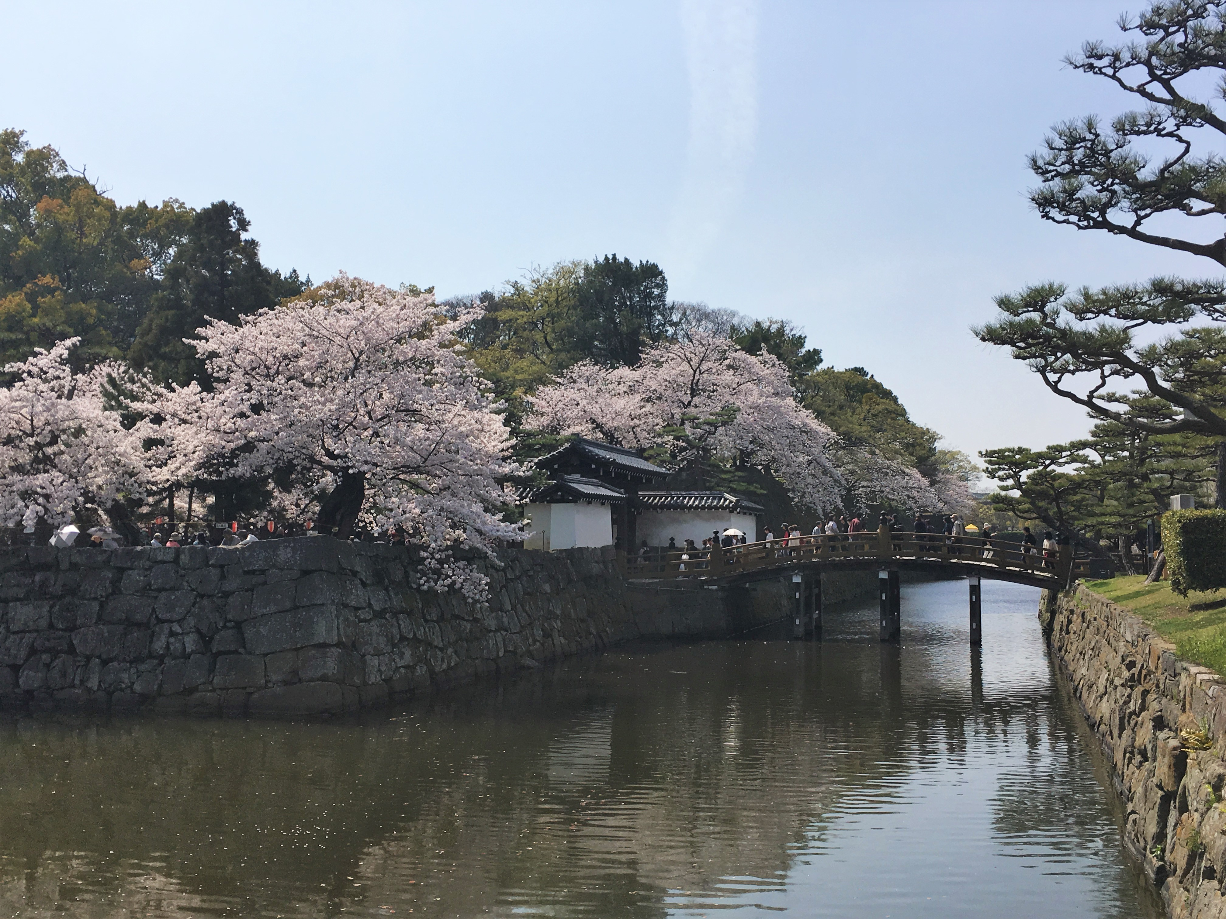 outer moat of wakayama castle and blooming sakura trees