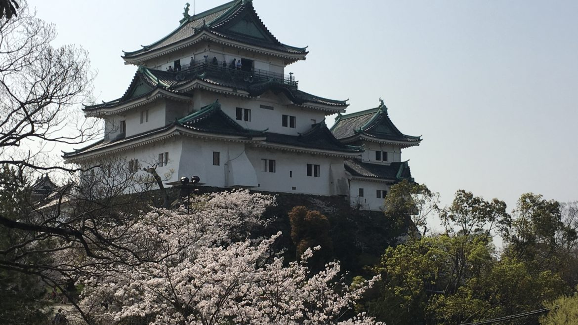 Wakayama castle with blooming cherry blossom trees on the left