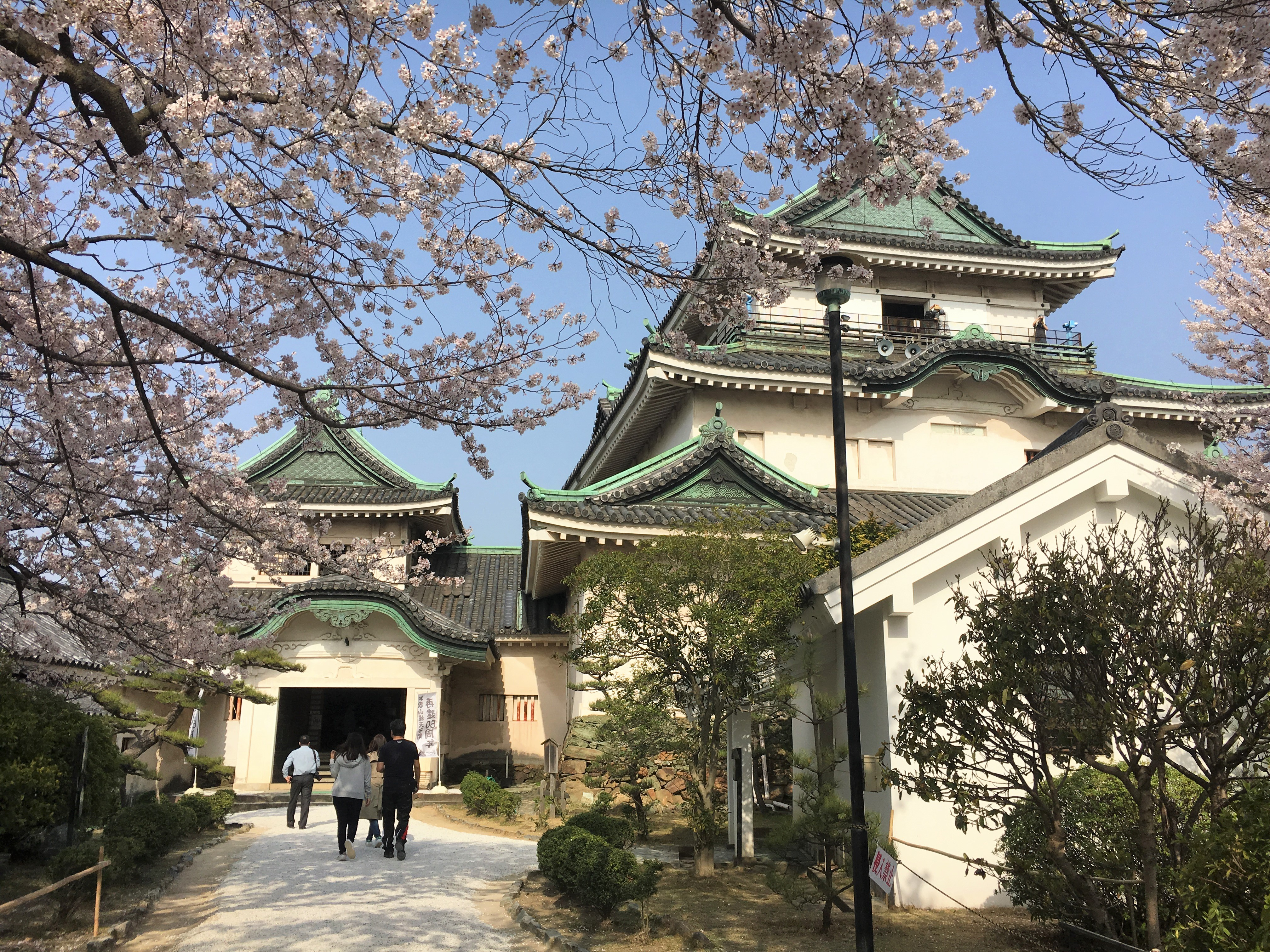 Entrance of Wakayama castle museum and blooming cherry blossoms
