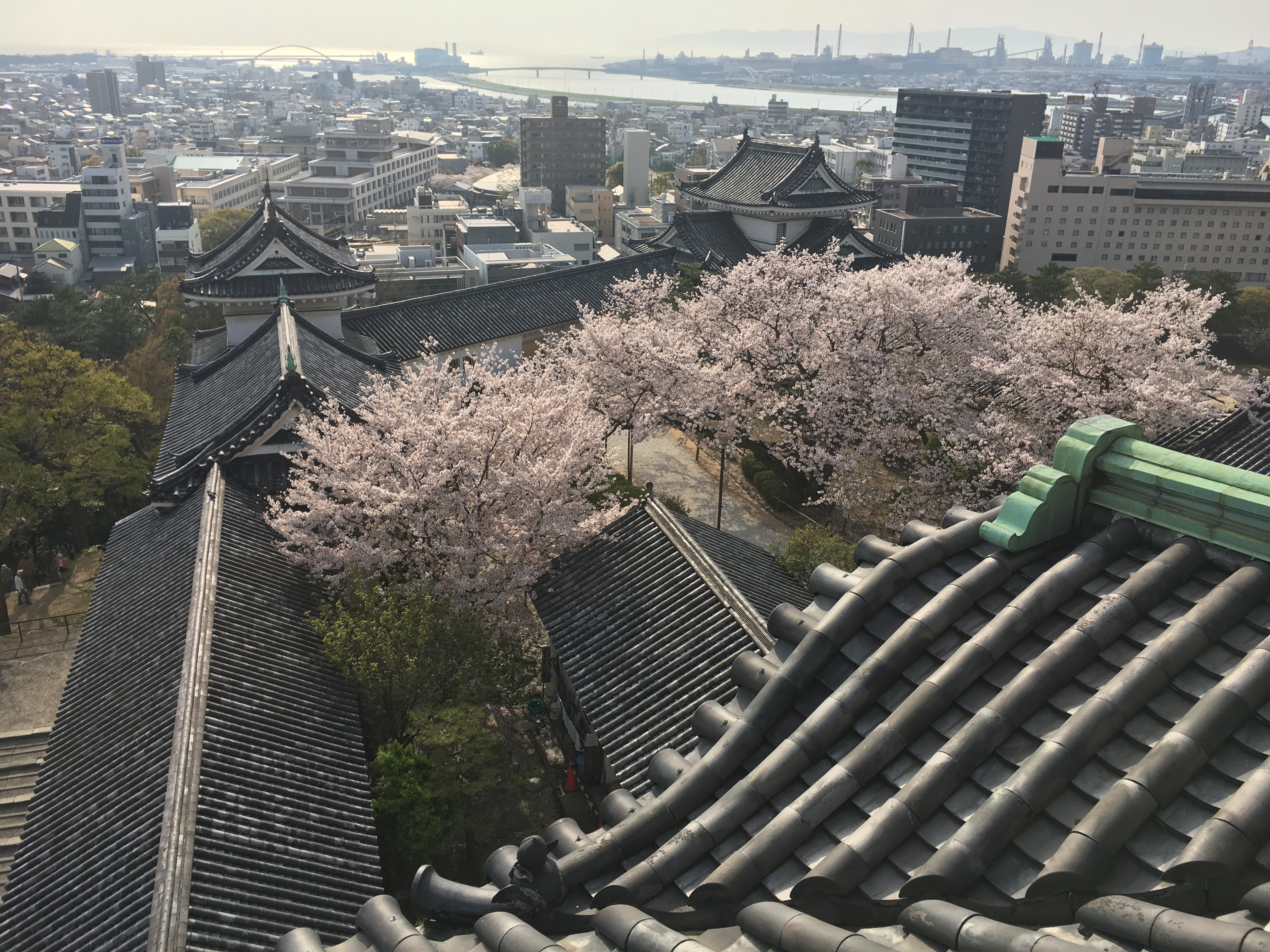 view overlooking wakayama castle and blooming cherry trees