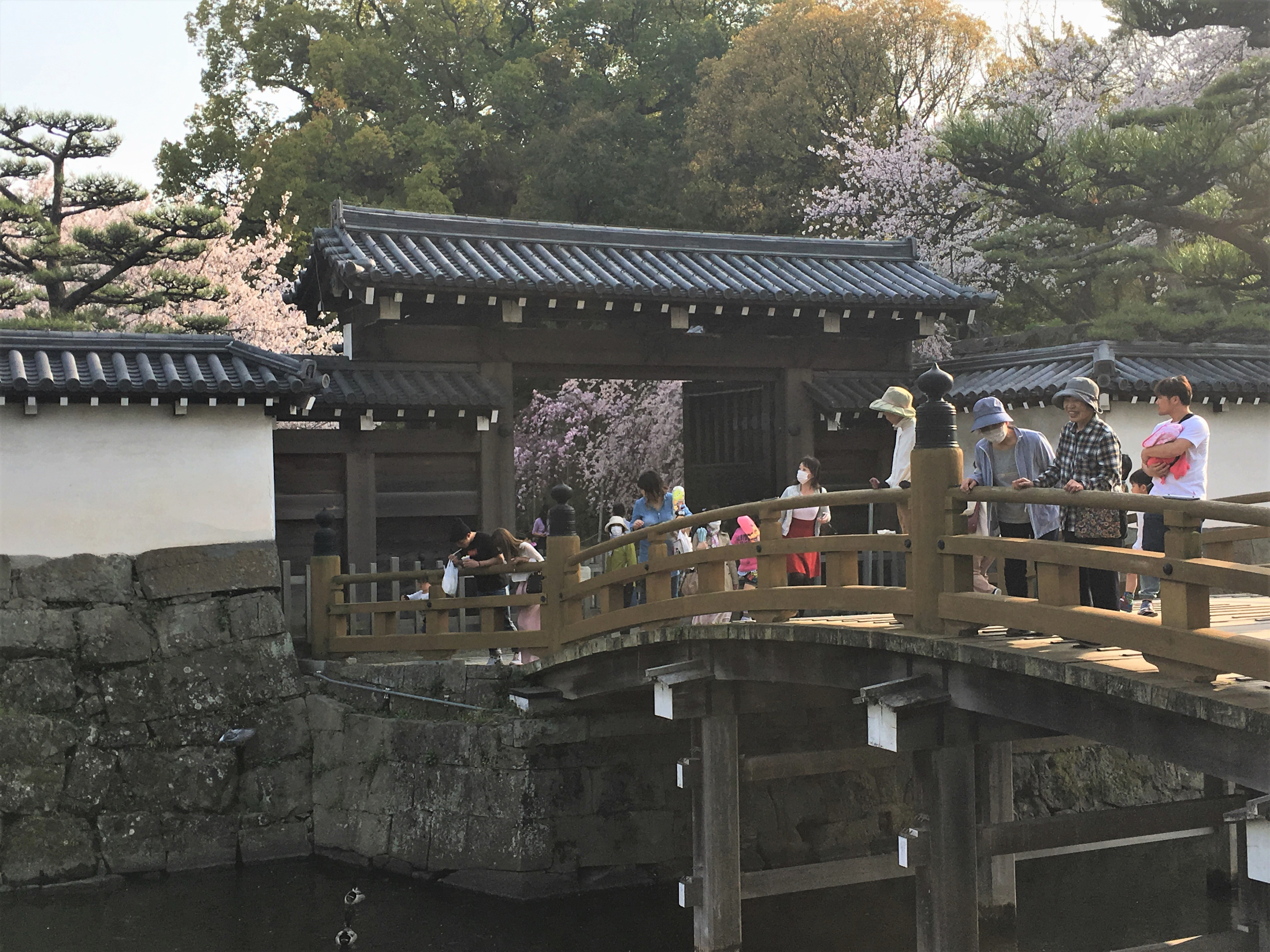 People entering throug wakayama castle's otemon gate surrounded by blooming cherry blossom