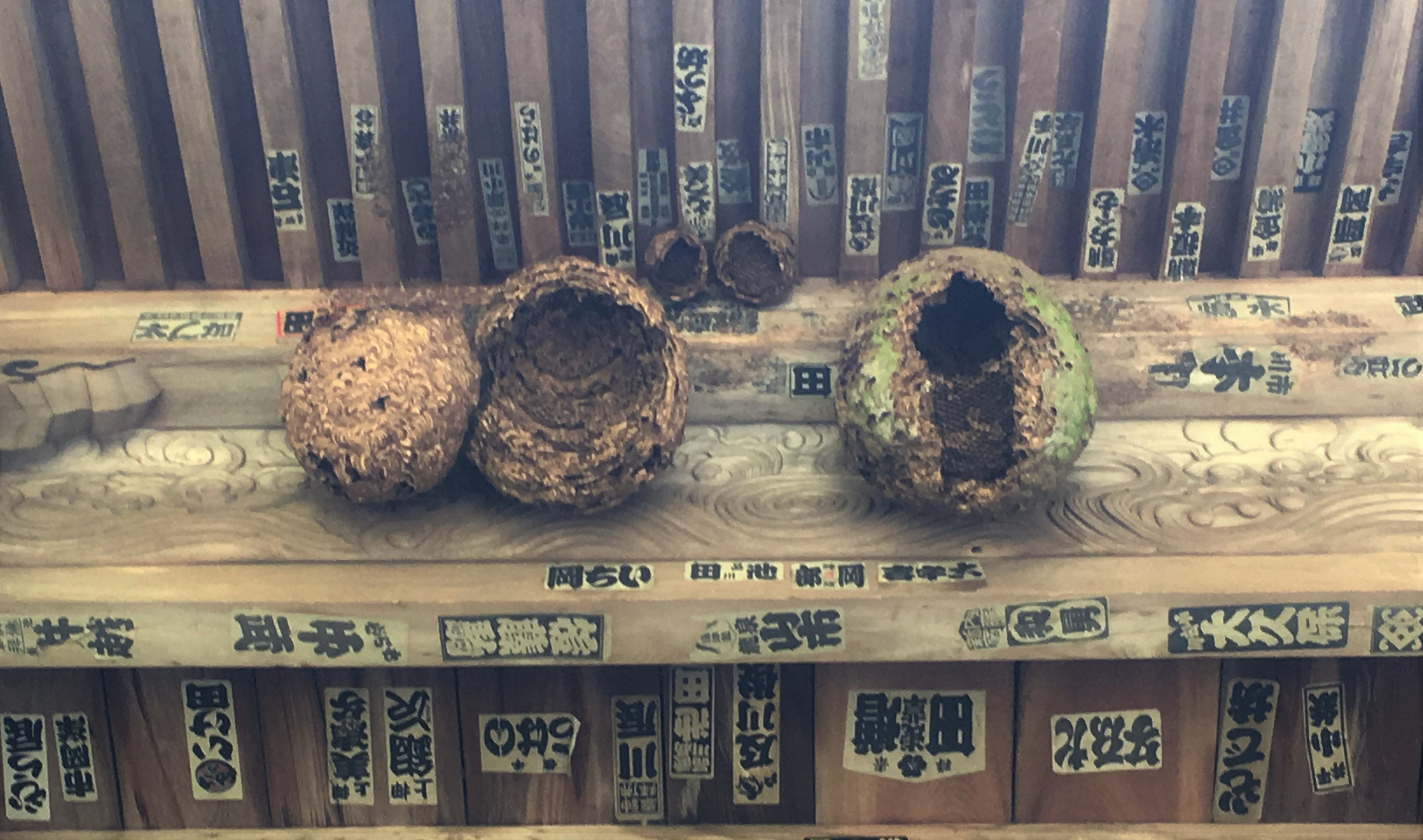 three smashed Japanese hornet nets on the romon gate of sefuku-ji