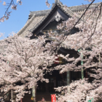 Kimiidera Temple, Top Pick for Sakura in Wakayama