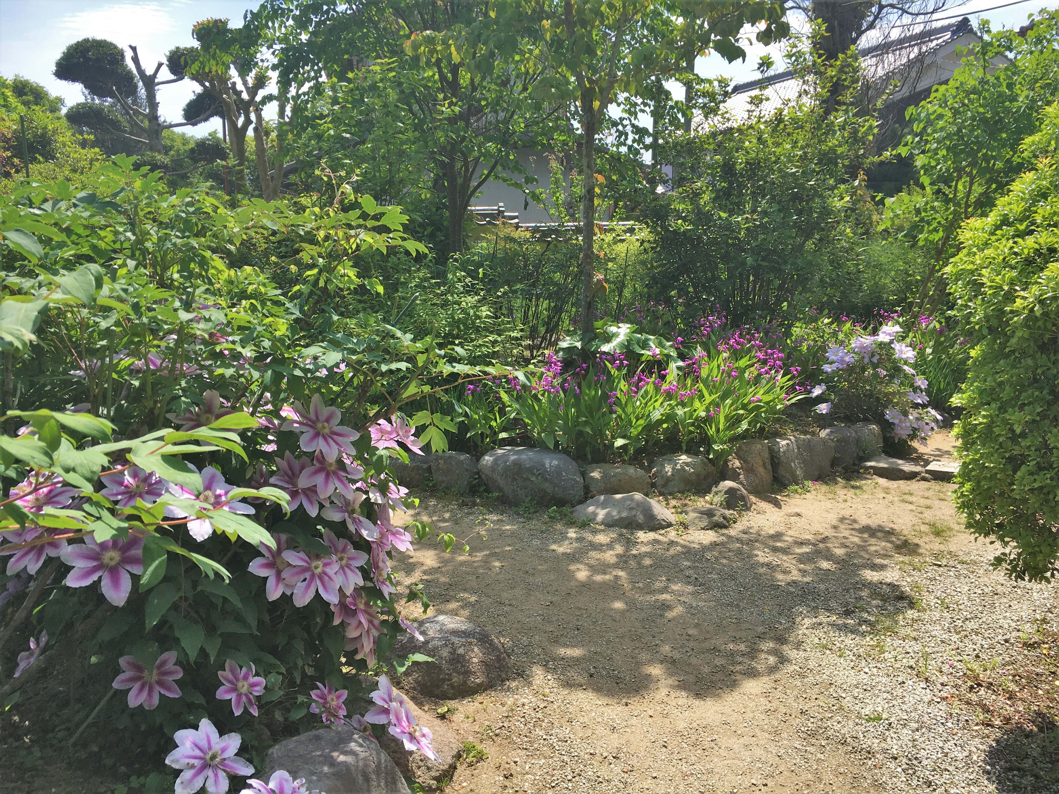 blooming flowers at koguden garden in Taima-dera