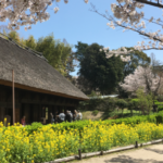 The Open-Air Museum of Old Japanese Farmhouses