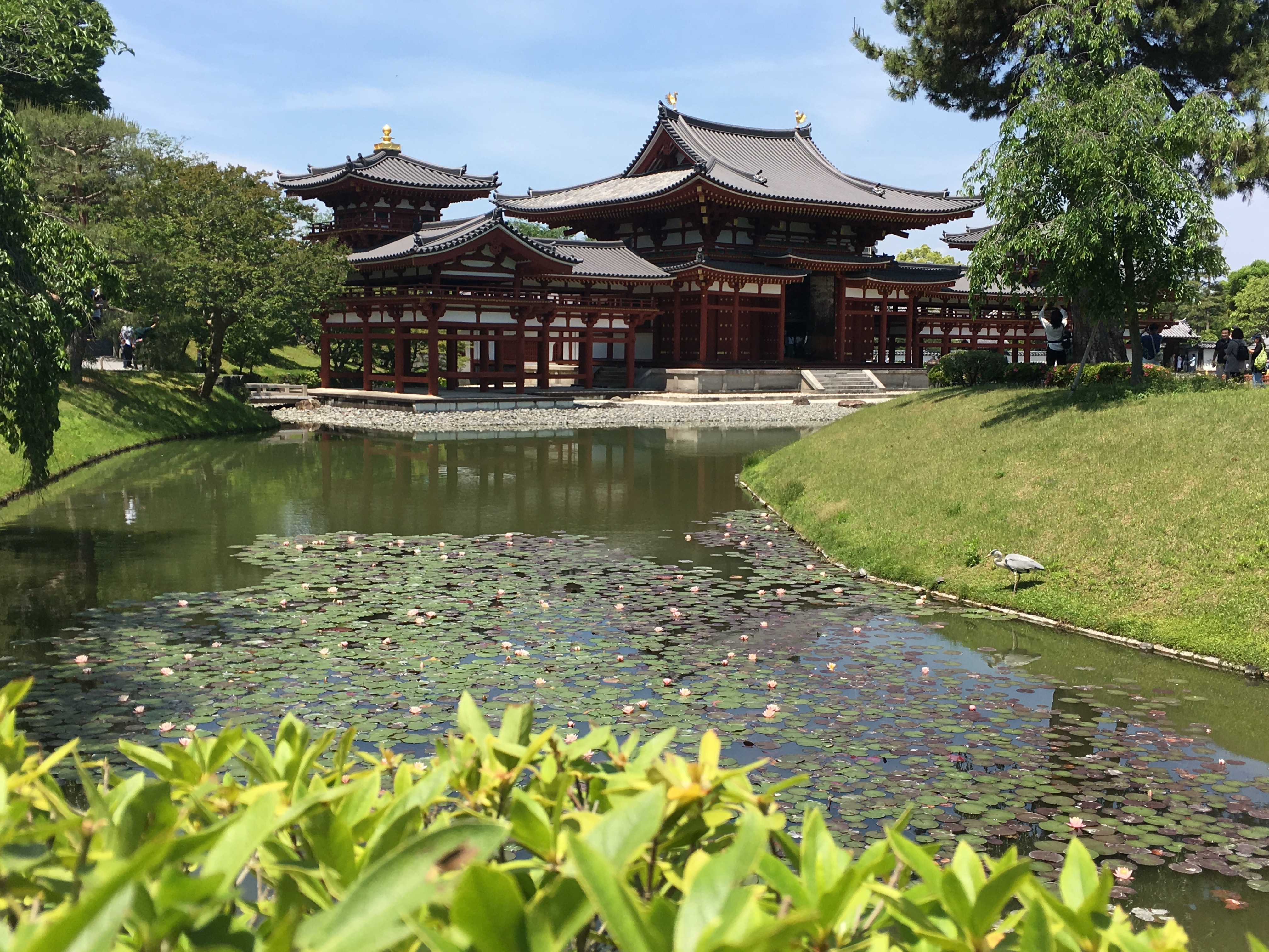 pond in front of the Hooudo at Byodoin Temple plus heron