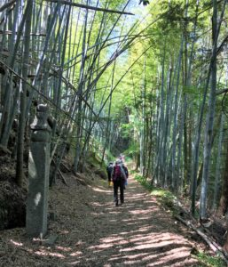 Bamboo forest on the choishimichi trail