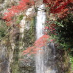 Minoo Waterfall, Osaka's Best Spot for Fall Leaves!