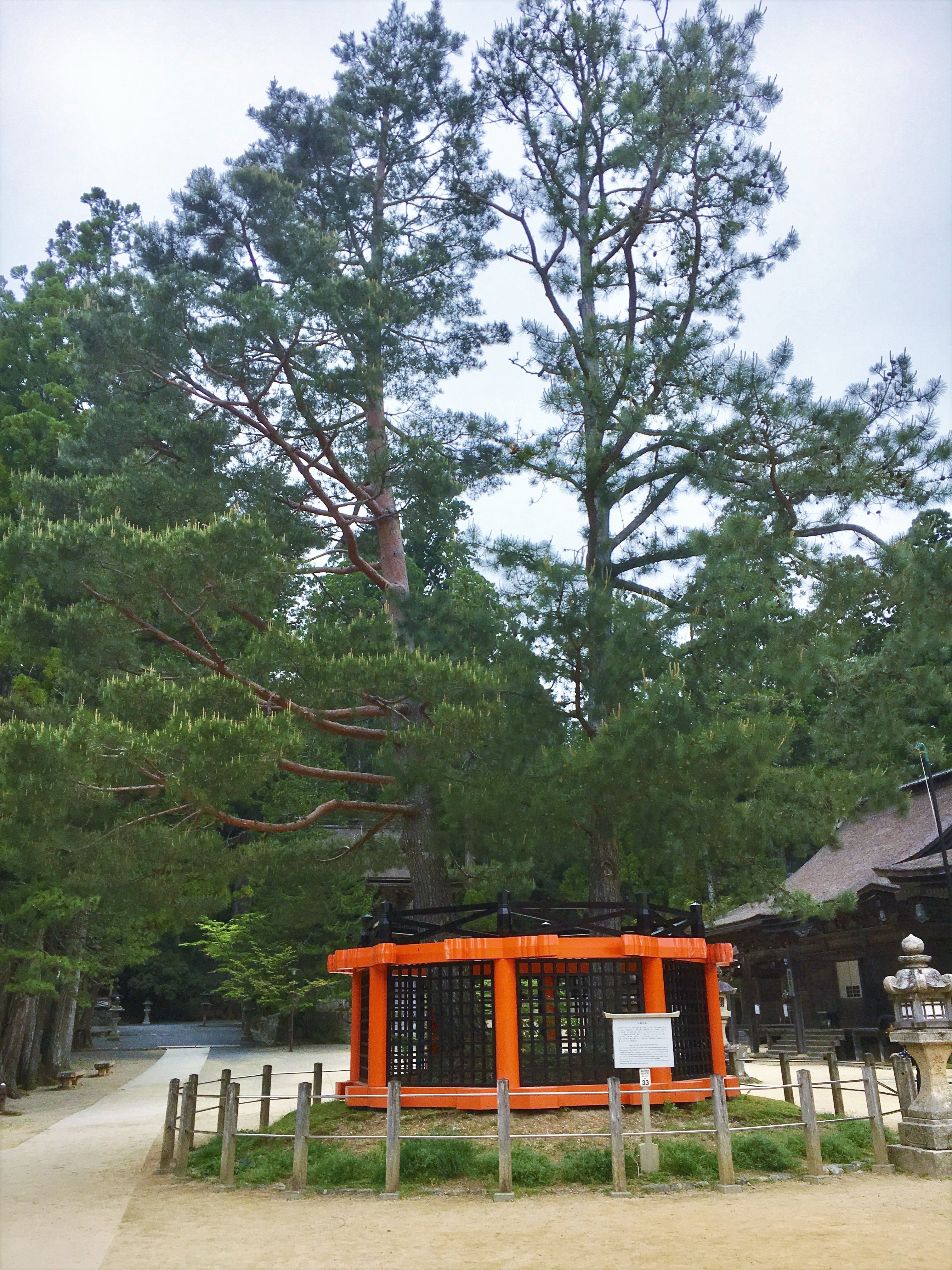 Sanko no Matsu pine tree in the Danjo Garan at Koyasan