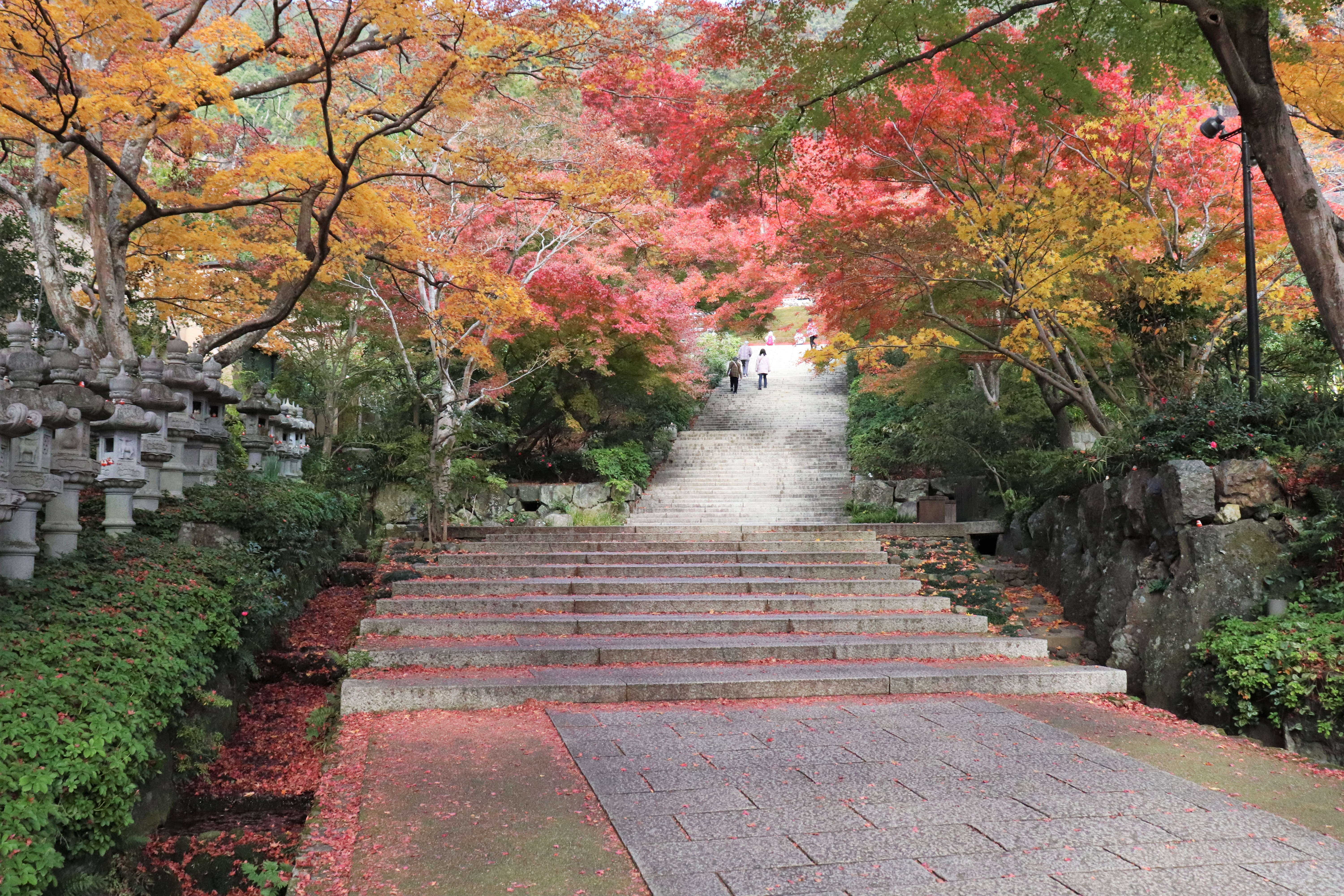 stone path lined with fall foliage at katsuo-ji temple