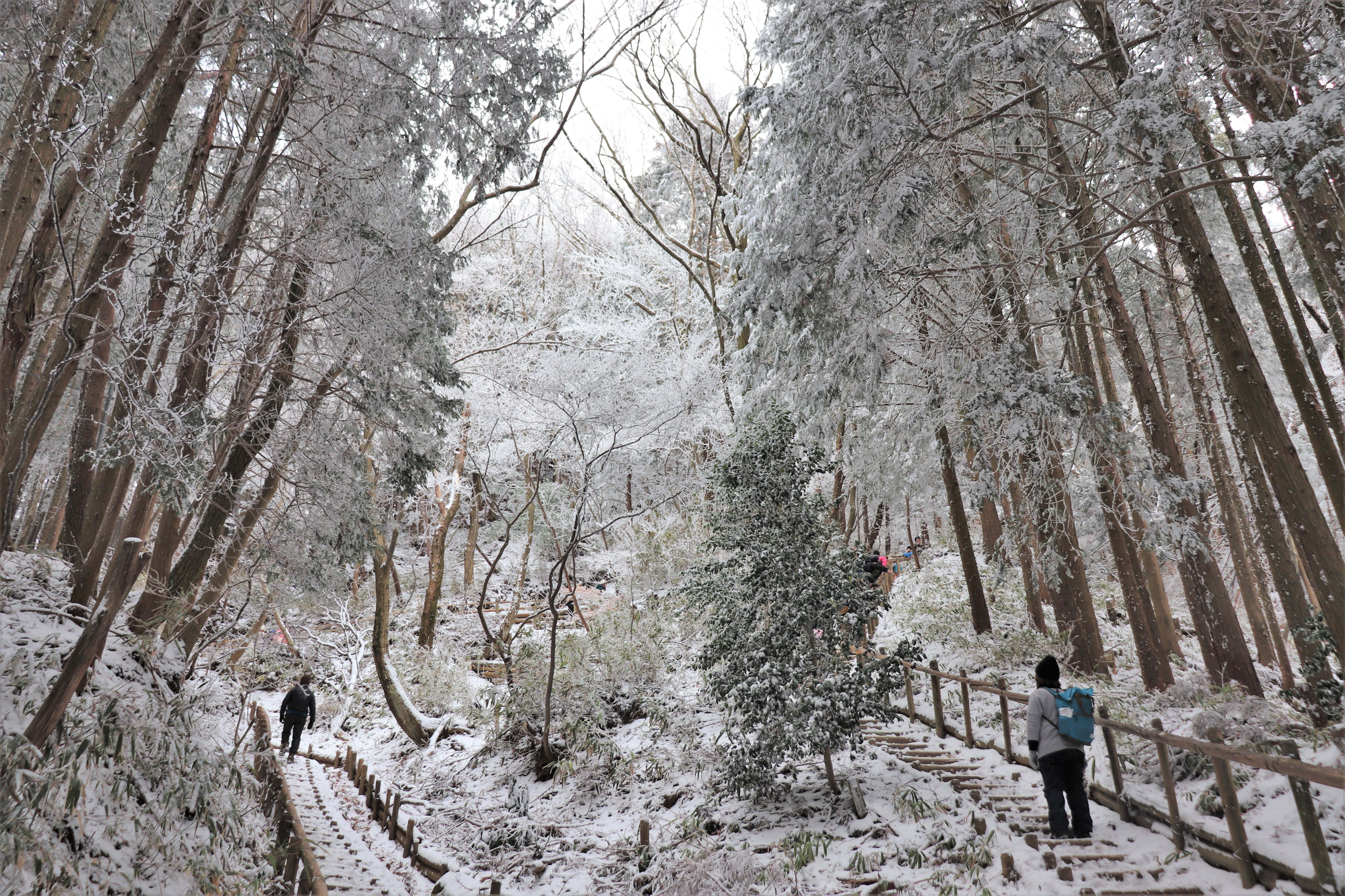 snow covered trail at mount kongo