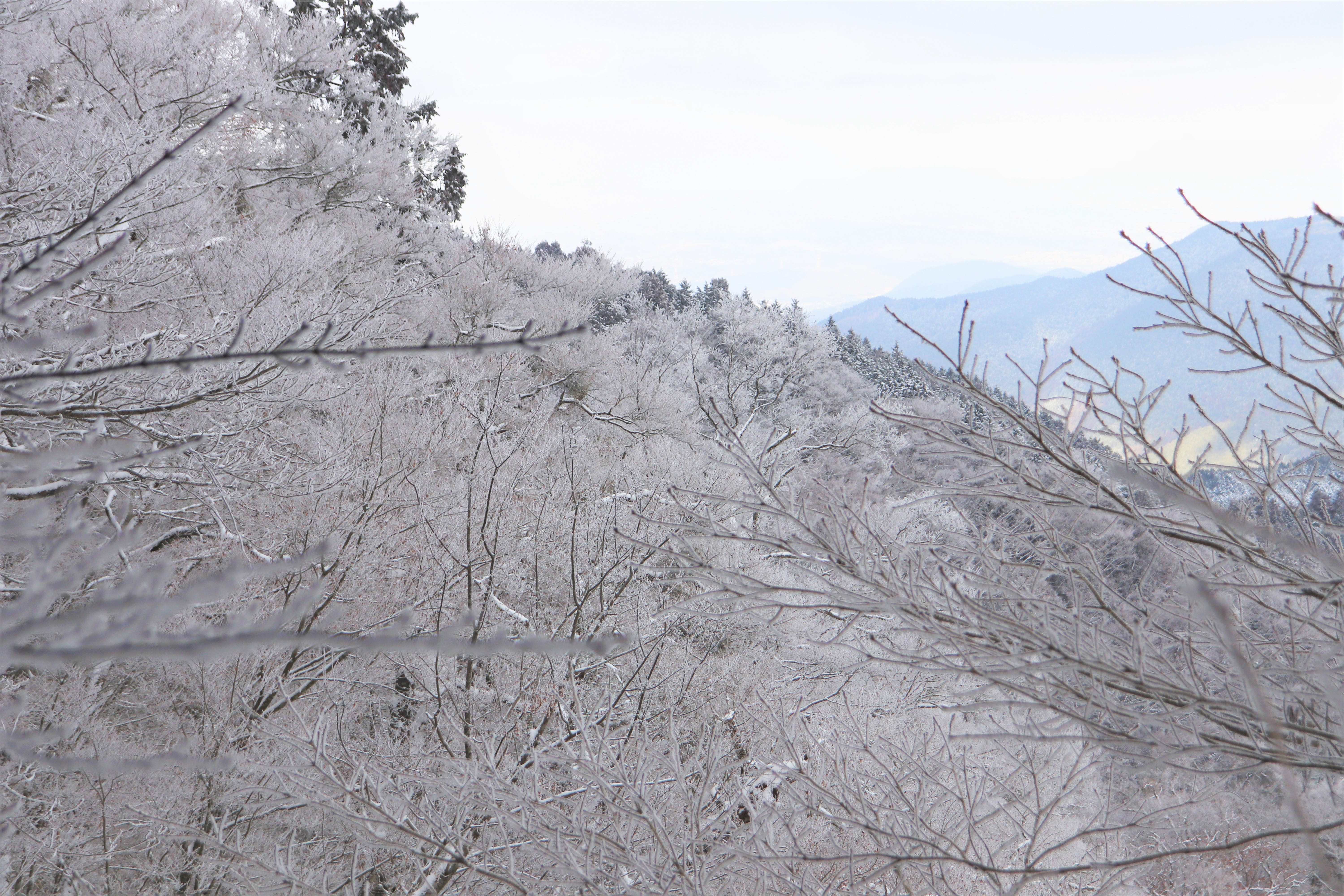 frost covered branches on the mountain side of mount Kongo