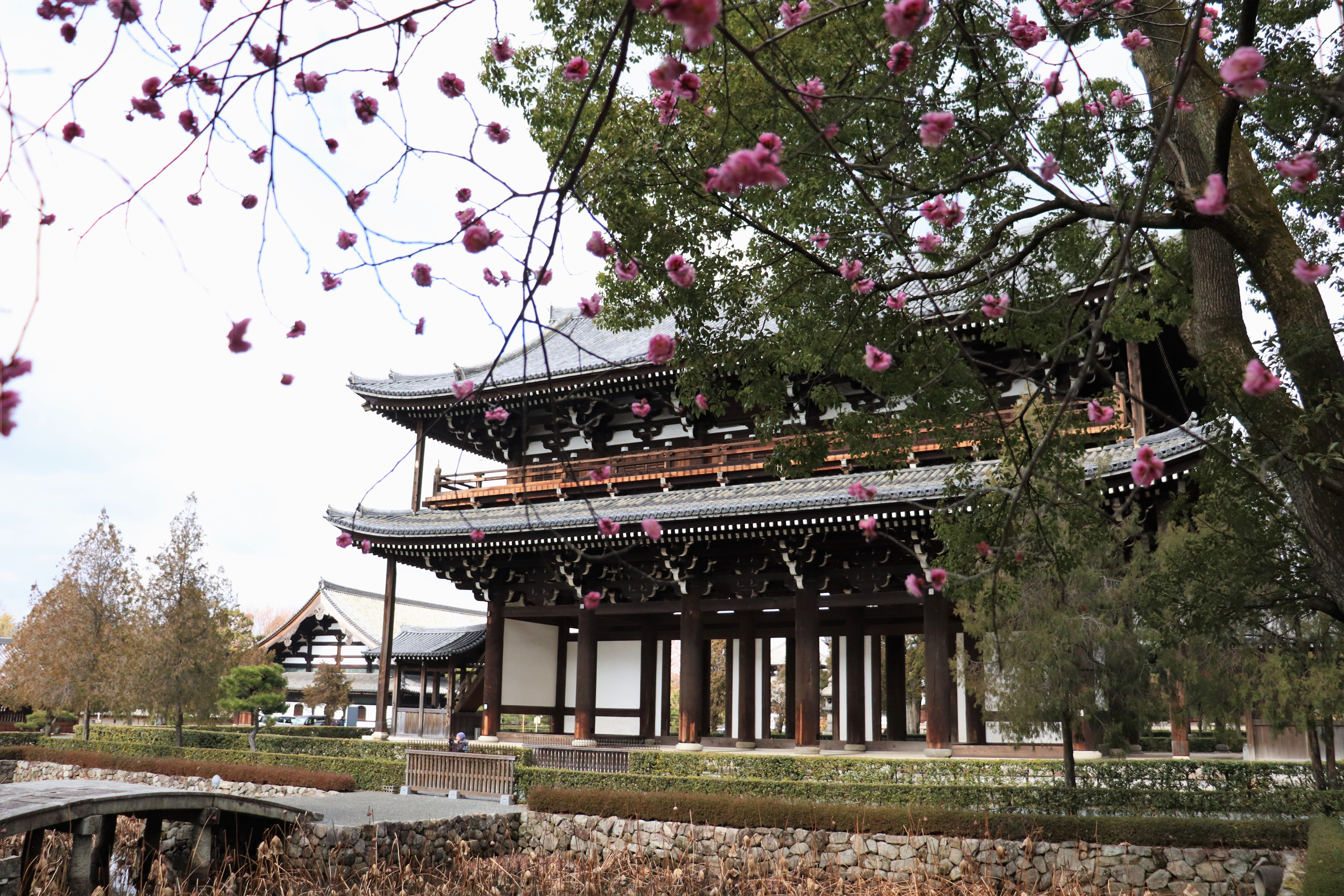 Sanmon Gate of Tofuku-ji Temple framed with plum blossoms