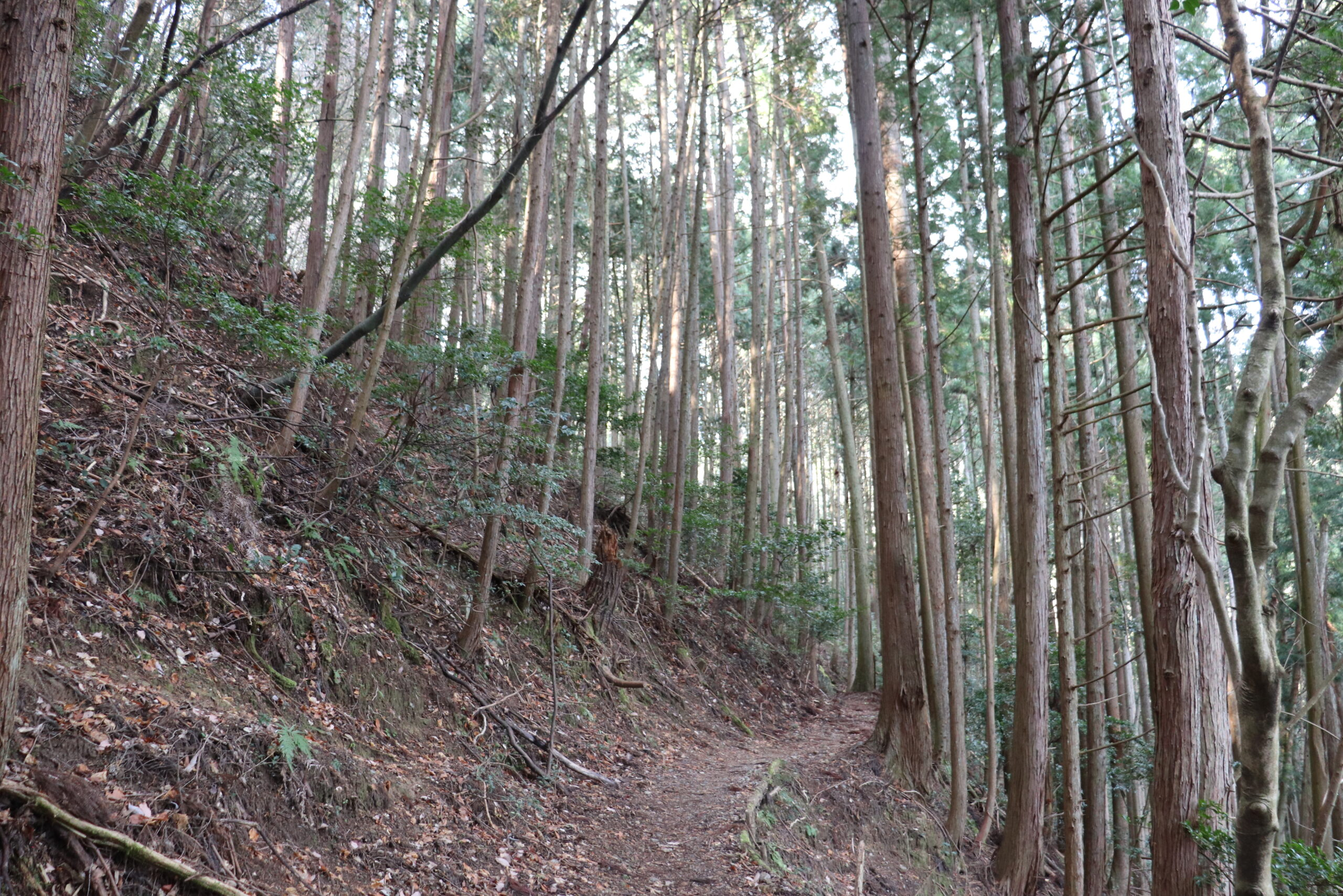 Nusuttodani Ravine of the Kitayama West Course, Kyoto Circuit Trail