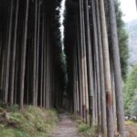Kitayama West Course: Hiking the Kyoto Circuit Trail