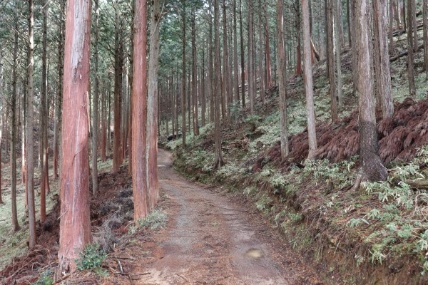 Keihoku Course part of the Kyoto Circuit Trail
