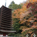 Tanzan Shrine: the Most Beautiful Fall Foliage in Nara