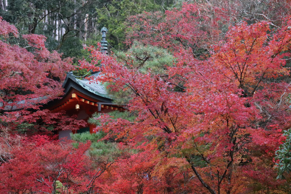 Hondo of Bishamon-do Temple surrounded by red leaves
